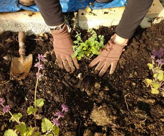 Hands in earth. Gardening courses in bath bristol somerset and wiltshire