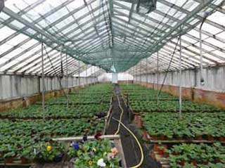 Image of mintys garden centre in Frome to illustrate a blog about local independant garden centres