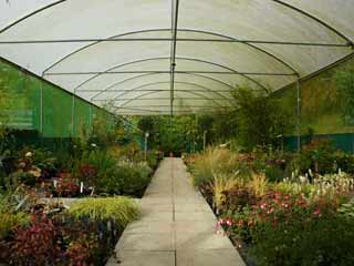 Image of a polytunnel at Barters to illustrate a blog about independant garden centres in Frome, Somerset
