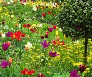 Image of spring bulbs to illustrate garden tours