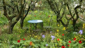 An image of a well maintained garden to illustrate seasonal garden maintenance workshops