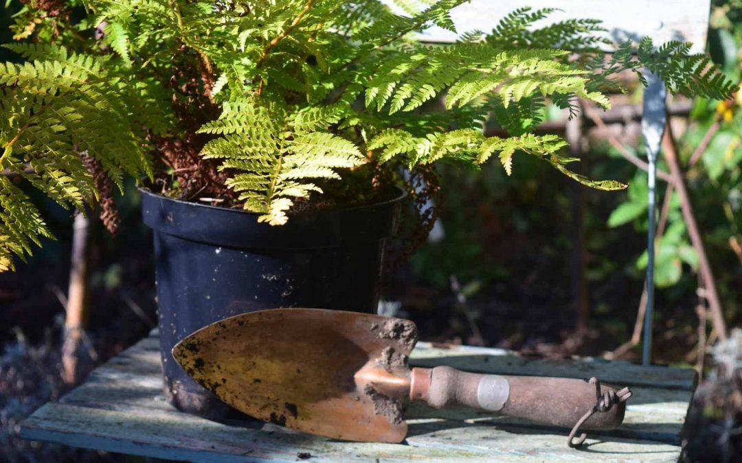 Failsafe Garden Plants