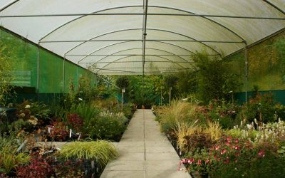 Frome Independent Nurseries