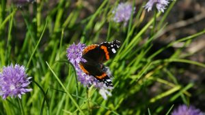 image of a red admiral butterfly to illustrate the calendar of garden and floral workshops in somerset wiltshire bath and bristol
