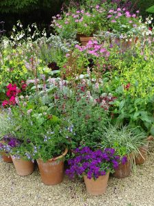 terracotta pots of summer flowers